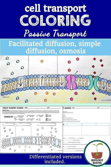 Cell Transport Passive Transport Coloring With Images Cell
