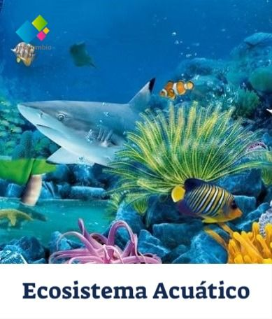 Ecosistema Acuatico Ecosistema Acuatico Ecosistemas Tipos De Ecosistemas