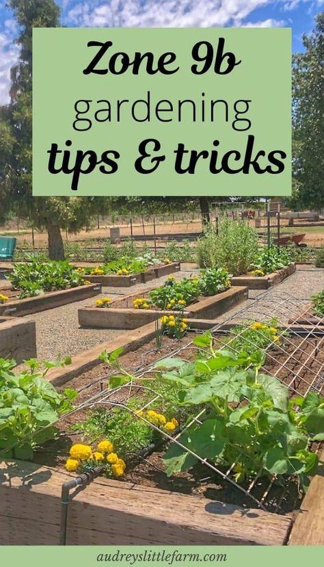 Zone 9b Vegetable Gardening Tips -