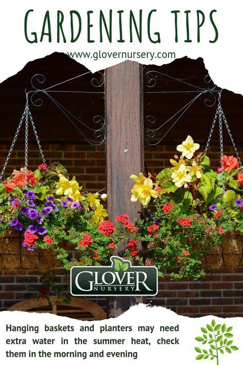 Seasonal Plant Yard Care Tips