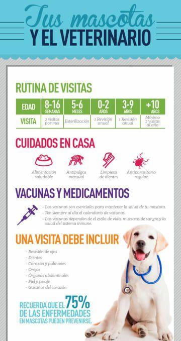 Tipos De Collares De Castigo Para Perros
