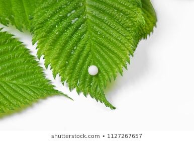 Homeopathy A Homeopathy Concept With Homeopathic Medicine Alternative Ball Beauty Blue Bottle Chamomile In 2020 Homeopathic Medicine Homeopathy