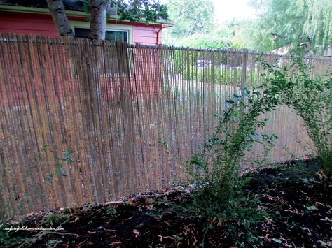 After Five Foot High Chain Link Fence Is Softened By The Split