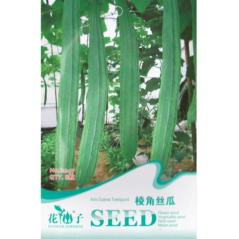Seeds Luffa Luffa Aegyptiaca 15 Samen
