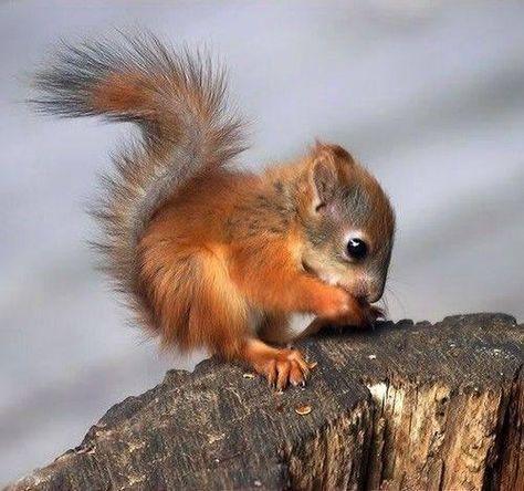 Baby squirrel.