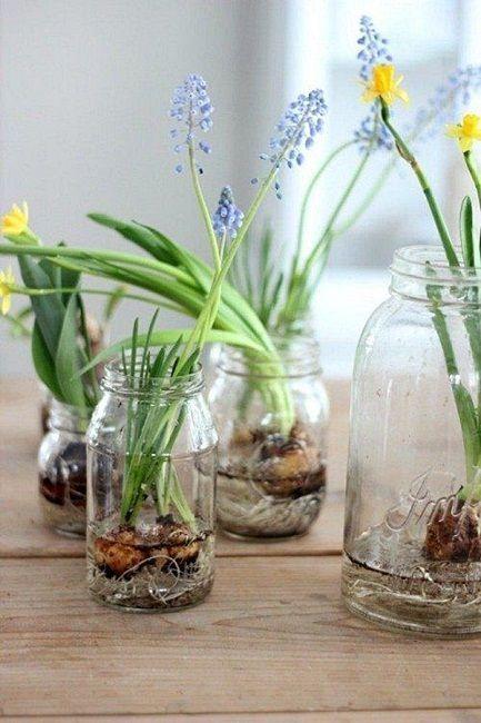 Wiosenne Kwiaty Cebulowe W Szklanych Naczyniach Flower Arrangements Spring Diy Spring Bulbs