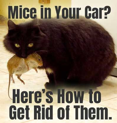 5 Natural And Humane Methods For How To Keep Mice Out Of Your Car And Prevent Them From Entering Your Garage Building In 2020 Getting Rid Of Mice Mouse Mice Repellent