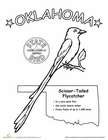 Oklahoma State Bird State Birds Oklahoma Worksheets