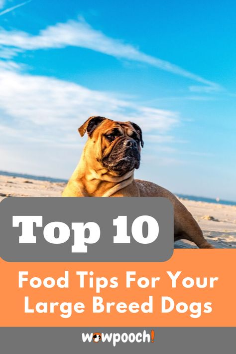 Best Dog Food For Large Breeds Puppies Adults Dry Canned Best Dog Food Large Breed Dog Food Dog Food Recipes