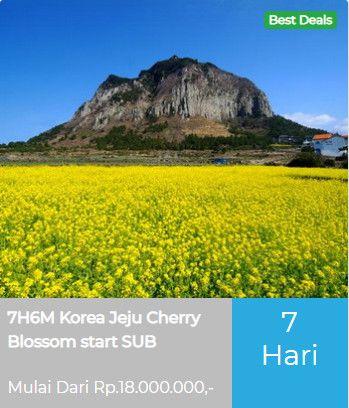 7h6m Korea Jeju Cherry Blossom Start Surabaya By Royalbrunei Tanggal Keberangkatan 10 Apr 2020 Biaya Tour Rp 18 000 000 Orang Bepergian Jeju Perjalanan