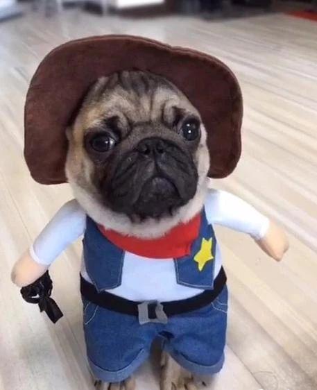Pets Halloween Costumes – Gadgetsflow.com