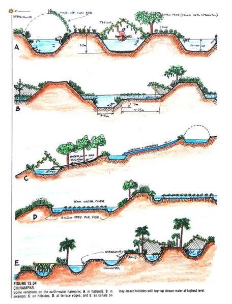 29 best Constructed Wetlands images on Pinterest Gardening - copy blueprint consulting bellevue wa