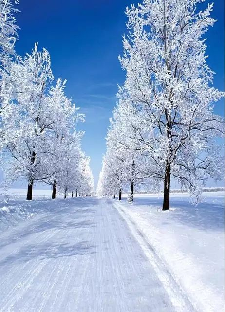 15 15us 19 Off Vinylbds Winter Photo Background 10x10ft Ground Snowflakes Tree Photography Backdrops Washable White Background Photo 3241 Lk Background Pho Photography Backdrops Photography Backdrops Cheap Photo Backgrounds
