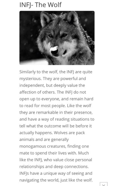 16 personalities, INFJ - The Wolf 🐺