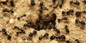 Como Acabar Con Las Termitas Remedios Caseros Contra Las Hormigas Las Hormigas