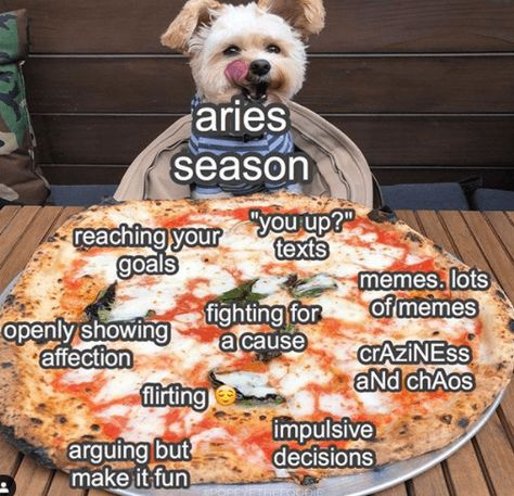 50 Best Aries Memes That Describe This Zodiac Sign | YourTango