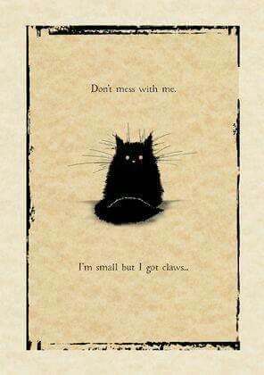 Pin By Michelle Malchow On Quotes Sayings Cats Old Cats Cat