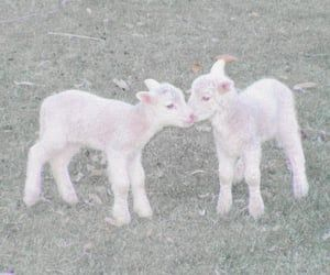 Springtime | spring, wildlife ja lamb Equestria Girls, Fairy Land, Fairy Tales, Farm Animals, Cute Animals, Fluffy Cows, Baby Goats, Alpacas, Faeries