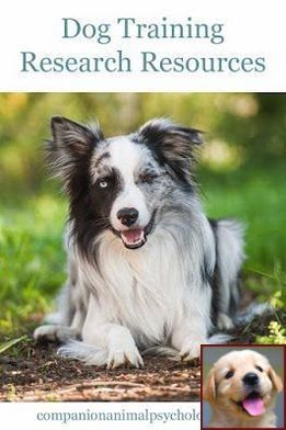 Dog Behavior Leaning On You And Dog Training Classes Victoria Bc