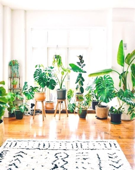How Plants Science Experiments Plants Hangers Strawberry Plants 100 Texas Sun Hardy Plants 7884 In 2020 Hanging Plants Indoor Indoor Plants House Plants Indoor