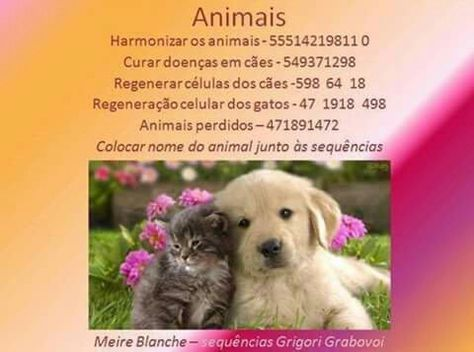 Grabovoi code for healing dogs 8941898 Grabovoi Codes Dogs