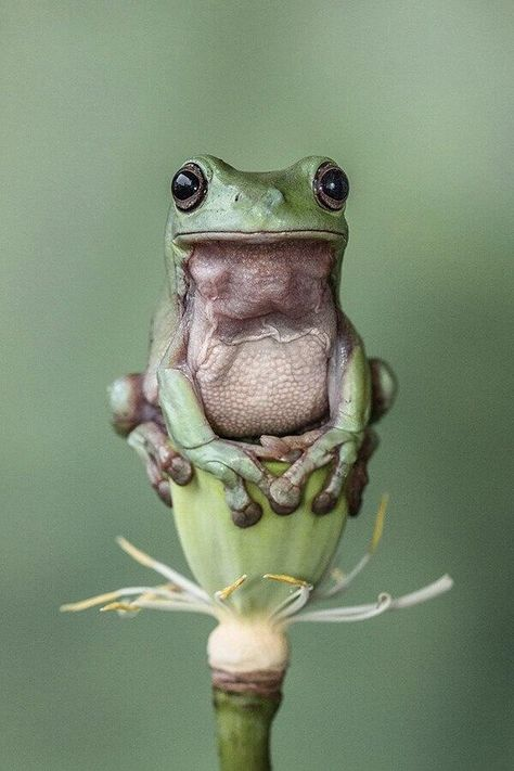 """Frog tried to put an end to the fight. She yelled for them to stop, but she was a frog, so it only came out as a tiny """"Ribbit. Animals And Pets, Baby Animals, Funny Animals, Cute Animals, Nature Animals, Funny Frogs, Cute Frogs, Reptiles And Amphibians, Mammals"""