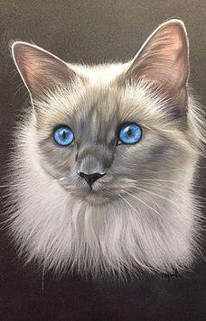 Pastels chats | lespastelsdevir