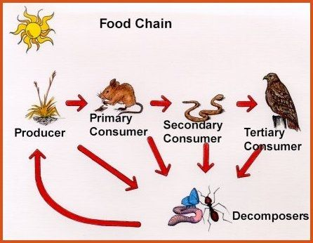 Producers Consumers And Decomposers The Existence Of Life