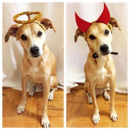 25 Adorable Diy Dog Costumes For Halloween Diy Dog Costumes