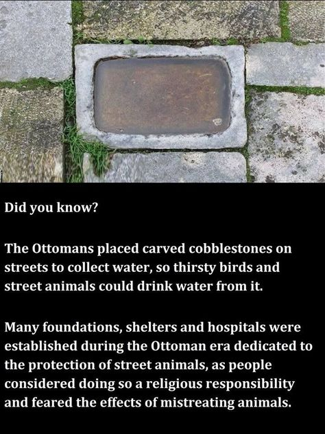 The Ottomans placed carved cobblestones to collect water for thirsty birds and street animals. That is SO kind. The More You Know, Good To Know, Did You Know, Wtf Fun Facts, Random Facts, Faith In Humanity Restored, Interesting History, Interesting Facts, Looks Cool