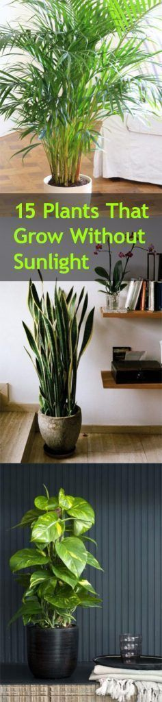 sumptuous design ideas green house plant identification. Large Indoor Trees That Make a Bold Statement  Big plants Drama and Plants