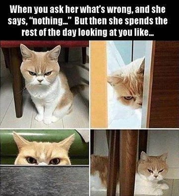 The Best Cat Meme Of The Decade 50 11 Funny Cat Memes Funny Relatable Memes Funny Animal Memes
