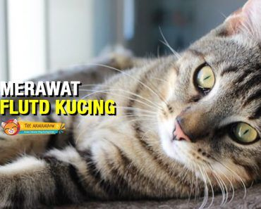 Pin By The Mamamiaow On Kesihatan Kucing Cats Animals