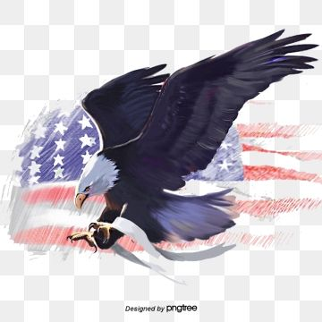 American Eagle American Flag Eagle White Headed Sea Eagle Elements Animal Png Transparent Clipart Image And Psd File For Free Download American Flag Eagle Silhouette Illustration American Symbols