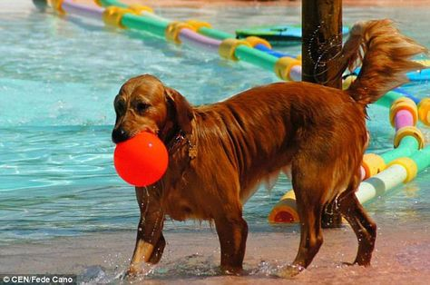 The Resort Canino Can Jane Complete With Swimming Pool Spain - Purpose built canine pool every dogs dream