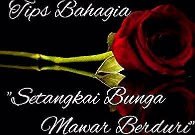 15 Bunga Mawar Cantik Tapi Berduri Tips Bahagia Setangkai Bunga Mawar Berduri Youtube Cara Mudah Menanam Bunga Mawar Di Rumah Tr In 2020 Movie Posters Poster Movies