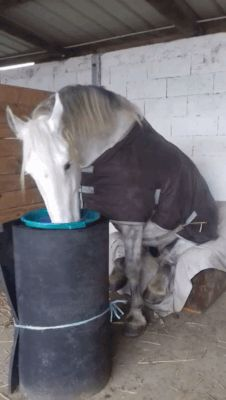 GIF Place for a normal horse feed