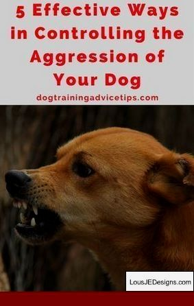 Train My Dog Not To Jump And Pics Of How To Train Your Dog To