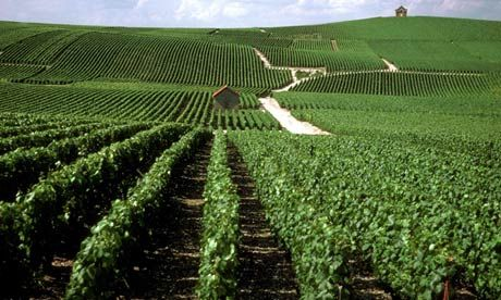 Get to grips with the Champagne region with our tips on cellar tours, winemakers' B&Bs and bars to visit. Photograph: Fulvio Roiter