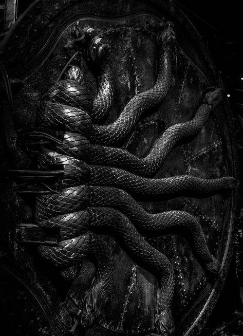 harry potter, snake, and slytherin image Draco Malfoy Aesthetic, Slytherin Aesthetic, Bellatrix Lestrange Aesthetic, Aesthetic Roses, Aesthetic Style, Aesthetic Dark, Slytherin House, Hogwarts Houses, Chamber Of Secrets