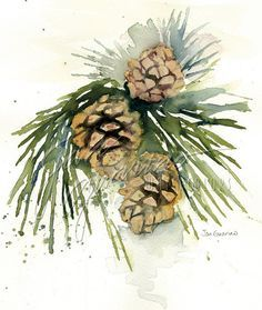 Two Pine Cones And Pine Needles Pine Branches Twig With Pinecones Christmas Art Christmas Watercolor Watercolor Christmas Cards