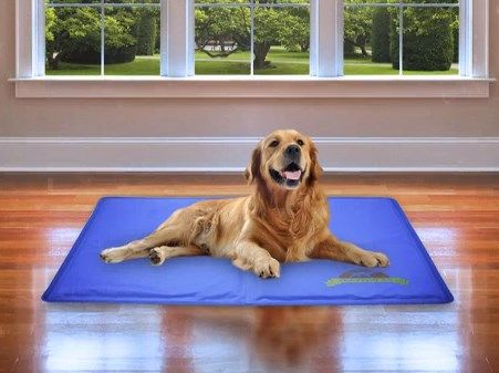 Polar Pad Gel Cooling Dog Mat Is The Best Cool Pad For Dogs On The Pet Market X Large Size Can Be Folded To Accommodate Smaller B Dogs Dog Cooling Mat Dog