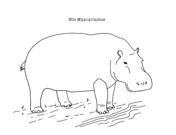 Nile Hippopotamus Coloring Page By Mama Draw It Teachers Pay Teachers In 2020 Coloring Pages Nile Color