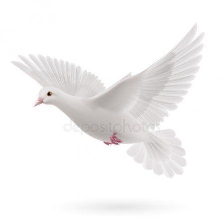 Paloma Blanca Ilustracion De Stock Stock Illustration White Doves Beautiful Nature