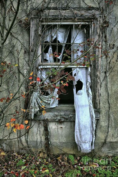 This is very interesting, as if the wind has brought life back into the deserted house.