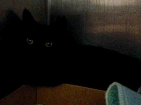 JAIME - A1089401 - - Brooklyn   *** TO BE DESTROYED 09/19/16 *** THIRD CHANCE FOR JAIME….One of an ebony trio, JAIME is New Hope rated, JUX is Unknown Status and JORDY is GONE………..JAIME was taken out of his environment, and just wants out…and the ACC is more than happy to grant his wish tomorrow but it's a one way ticket…. PLEASE CONSIDER HELPING THIS BLACK BEAUTY BY FOSTERING OR ADOPTING….It's too late for JORDY…J