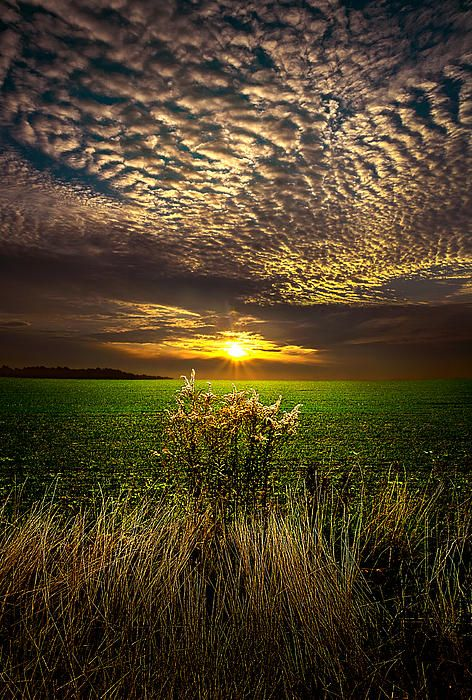 From the Horizon series by Phil Koch, turning natural Landscapes into Portraits of nature.