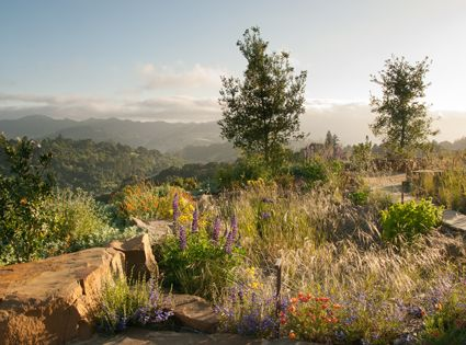 Native Plants Are Featured In This Design To Echo The Surrounding