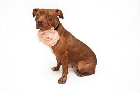 Psp On Dog Adoption Cute Animals Animals