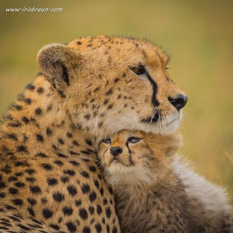 International Cheetah Day by Iris Braun was photo of the day on 9th January 2016. Earth Shots is a photo of the day contest celebrating the beauty and diversity of our planet.